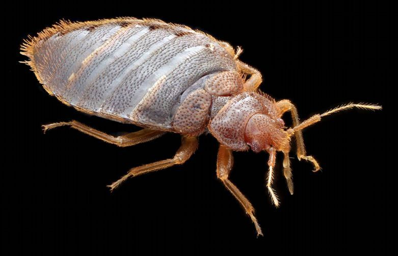 how to prevent bed bugs travel