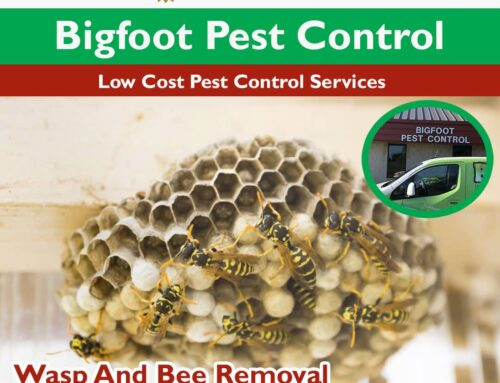 Wasp and Bee and Bed Bug Treatment in Wood Dale