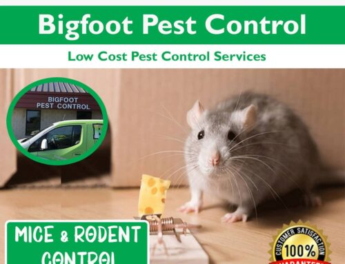 Mice control services by Bigfoot Pest Control